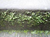 Moss och lav Arkivbilder