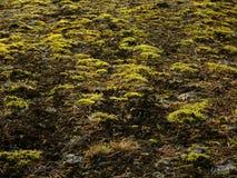 Moss och lavar arkivbild