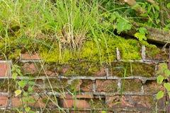 Moss och weed täckt smula väggbakgrund arkivbild