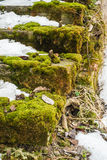 Moss on an old brick stairway on winter Royalty Free Stock Images