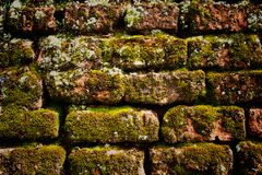 Moss on the old brick wall Royalty Free Stock Photography
