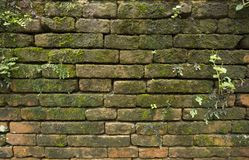 Moss on old brick wall Stock Photos