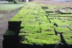 Moss on an old bricks Royalty Free Stock Photography
