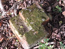 Moss on old bricks. Moss and growth cover bricks from an old structure Stock Photo