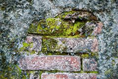 Moss on the old bricks. Texture of old brick covered green moss Stock Images
