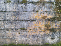 Moss on old concrete wall Royalty Free Stock Images