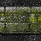 Moss old green wall stone pattern mold texture Stock Image