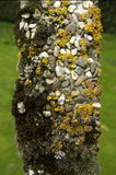 Moss on old headstone. Moss and pebbles on old headstone with grass in background Stock Photography