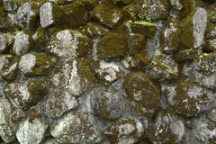 Moss on the old rok wall Stock Photography