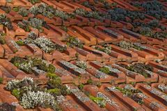 Moss on old roof. Of a historic farmhouse Stock Photos