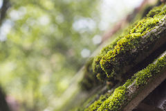 Moss on old roof tiles Stock Photography