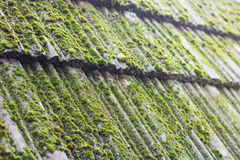 Moss on old roof tiles Stock Image