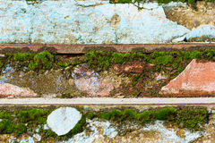 Moss on old stairs Stock Image
