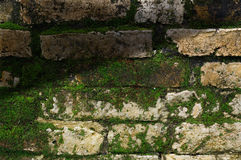 Moss on old stone wall Royalty Free Stock Photos