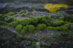 The moss on old tree. Beautiful green moss growing on the old tree in the forest Stock Photo