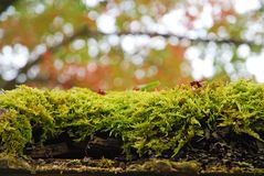 Moss on old wood door roof Stock Photo