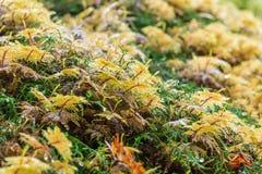 Moss at Olympic National Park Washington USA Royalty Free Stock Photos