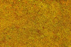 Free Moss On Concrete Wall, Texture And Background Royalty Free Stock Images - 162296789