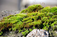 Free Moss On Stone Stock Photo - 4004090