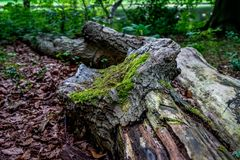Moss over a log of wood at Haagse Bos, forest in The Hague Royalty Free Stock Images