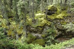 Moss covered rocks, Canada Stock Images