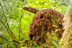 Moss over stump  in the rain forest Royalty Free Stock Photo