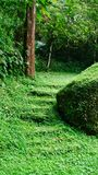 Moss overgrown stairs stock image