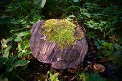Moss på en stubbe Royaltyfria Bilder
