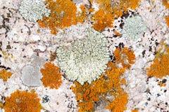 Moss på stenen arkivbilder