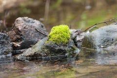 Moss på stenen Fotografering för Bildbyråer