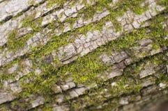 Moss på tre Royaltyfri Foto