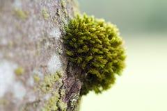Moss på tre royaltyfri fotografi