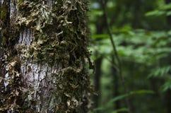 Moss på tre Royaltyfria Foton