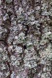 Moss på tre arkivbilder