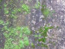 Moss på väggen Arkivfoton