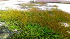 Moss p? v?ggen fotografering för bildbyråer