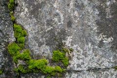 Moss p? vaggar naturligt royaltyfria bilder