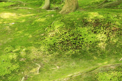 Moss parked in the sunshine filtering through foliage Royalty Free Stock Photo