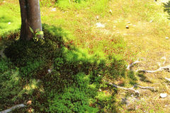 Moss parked in the sunshine filtering through foliage Royalty Free Stock Photos