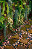Moss pathway. In my backyard Stock Photography