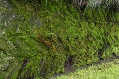 Moss Pattern Imagenes de archivo