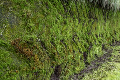 Moss Pattern Royalty Free Stock Photos