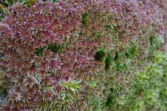 Moss Pattern selvagem, com projeto muito interessante fotografia de stock