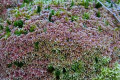 Moss Pattern selvagem, com projeto muito interessante imagens de stock royalty free