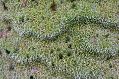 Moss Pattern selvagem, com projeto muito interessante fotos de stock royalty free