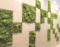 Moss pattern wall Royalty Free Stock Photography