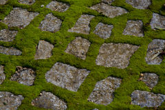 Moss on pavement. Green moss on the pavement Stock Photos