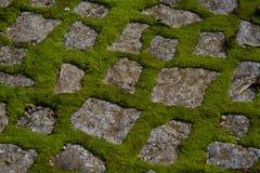 Moss on pavement Stock Photos
