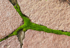 Moss on paving. Of red stones Royalty Free Stock Images