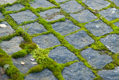 Moss on paving. Moss on granit brick paving Royalty Free Stock Images